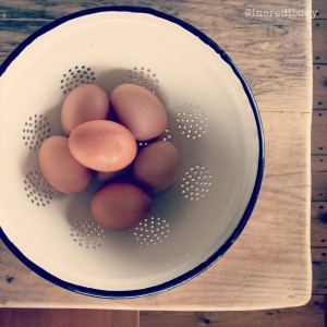 Aller-Farm-Incredibusy-13-eggs
