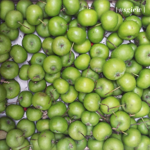 incredibusy apples sgiew